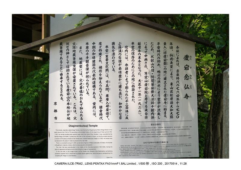 絶景京都・旅行記画像・春の新緑の愛宕念仏寺5月4.jpg