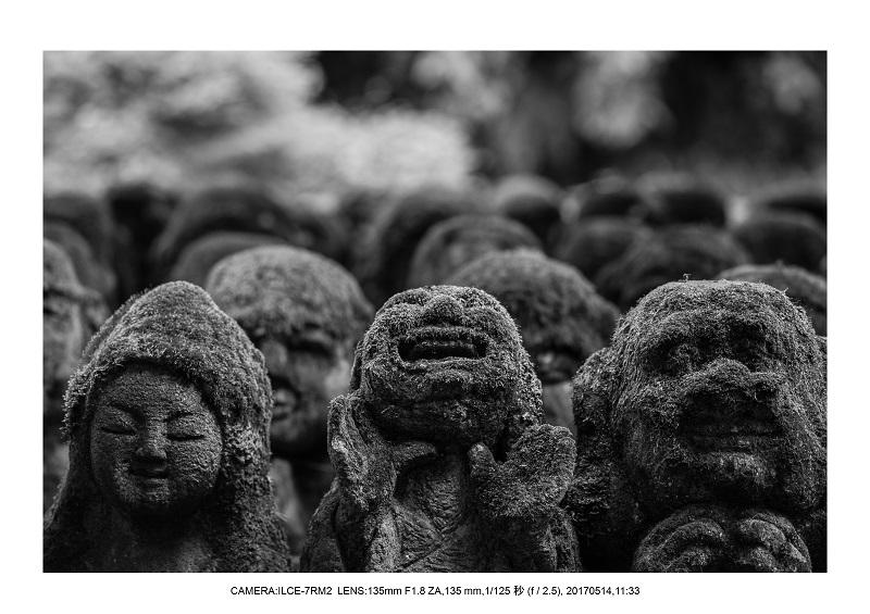 絶景京都・旅行記画像・春の新緑の愛宕念仏寺5月5.jpg