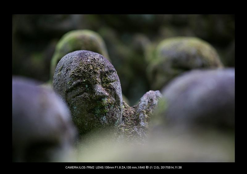 絶景京都・旅行記画像・春の新緑の愛宕念仏寺5月8.jpg