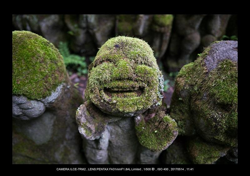 絶景京都・旅行記画像・春の新緑の愛宕念仏寺5月9.jpg
