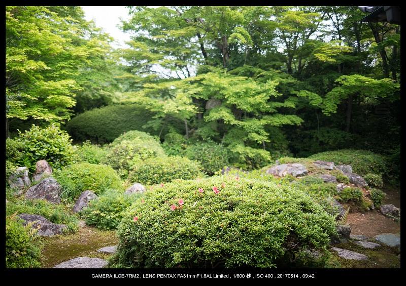 絶景京都・旅行記画像・春の新緑源光庵の丸窓5月5.jpg