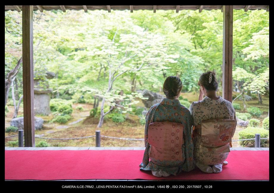 絶景京都・旅行記画像・春の新緑青もみじの圓光寺5月0.jpg