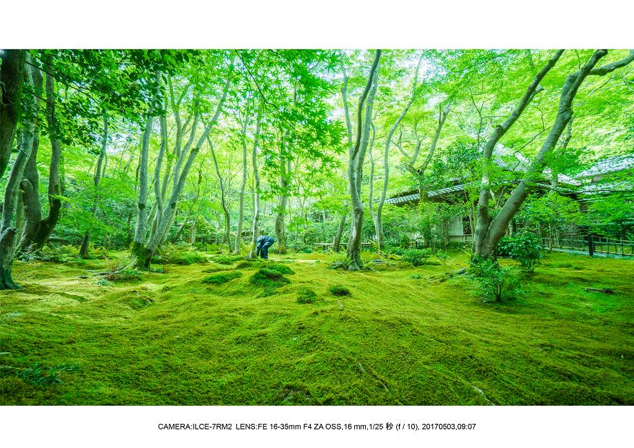 絶景京都・春の新緑青もみじと苔の祇王寺5月14-1.png