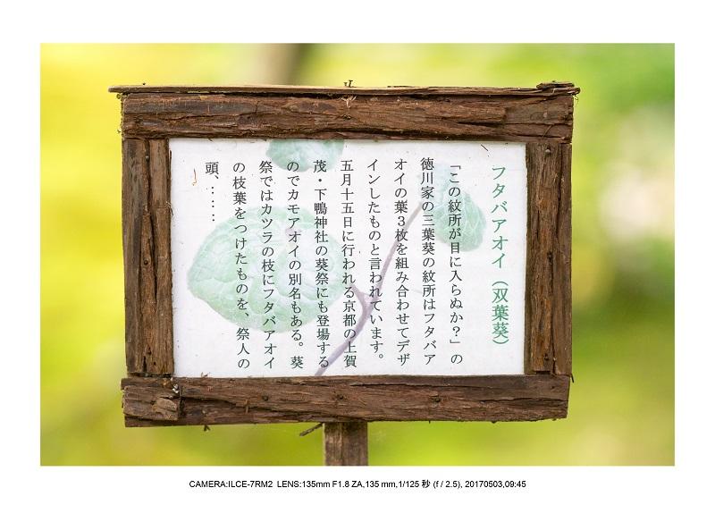 絶景京都・春の新緑青もみじと苔の祇王寺5月16.jpg