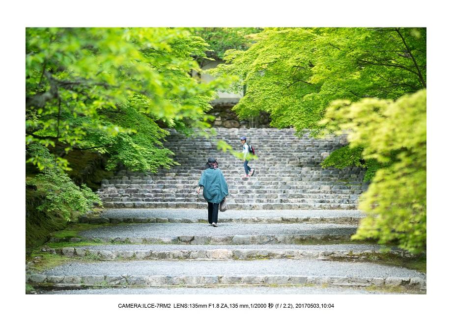 絶景京都・春の新緑青もみじの二尊院5月0.jpg