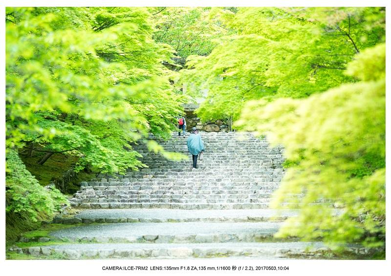 絶景京都・春の新緑青もみじの二尊院5月2.jpg
