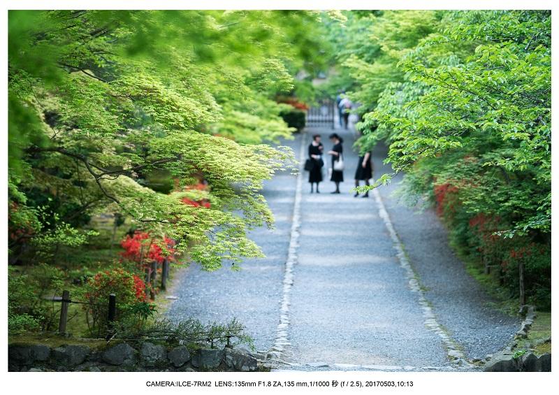 絶景京都・春の新緑青もみじの二尊院5月4.jpg