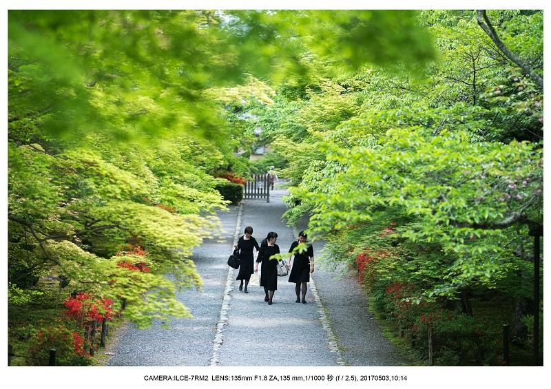 絶景京都・春の新緑青もみじの二尊院5月5.jpg