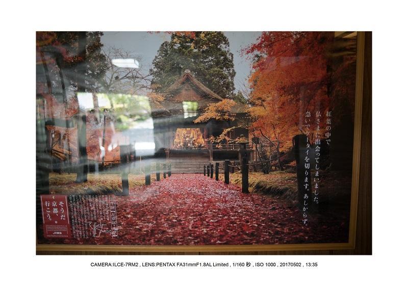 絶景京都・春の新緑青もみじの京都大原三千院画像5月11.jpg