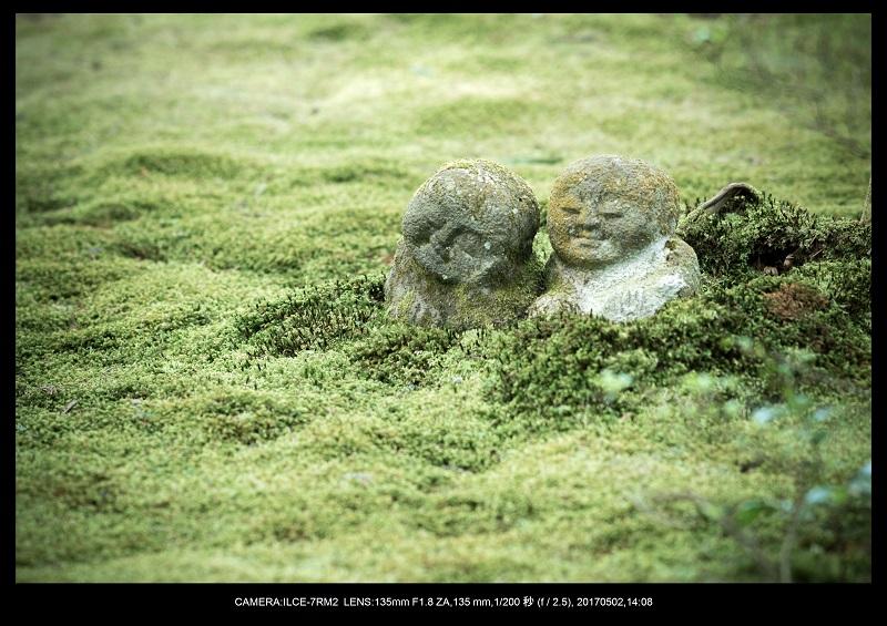 絶景京都・春の新緑青もみじの京都大原三千院画像5月19.jpg