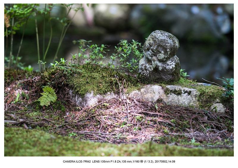 絶景京都・春の新緑青もみじの京都大原三千院画像5月21.jpg