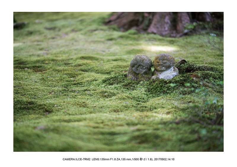 絶景京都・春の新緑青もみじの京都大原三千院画像5月22.jpg