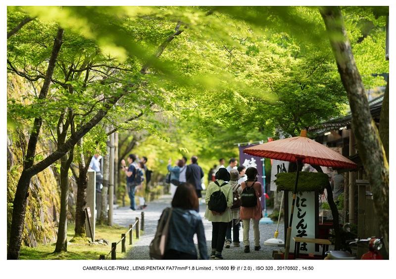 絶景京都・春の新緑青もみじの京都大原三千院画像5月29.jpg
