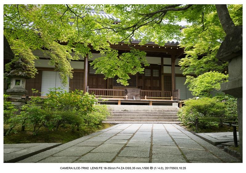 絶景京都・春の新緑青もみじの常寂光寺5月1.jpg