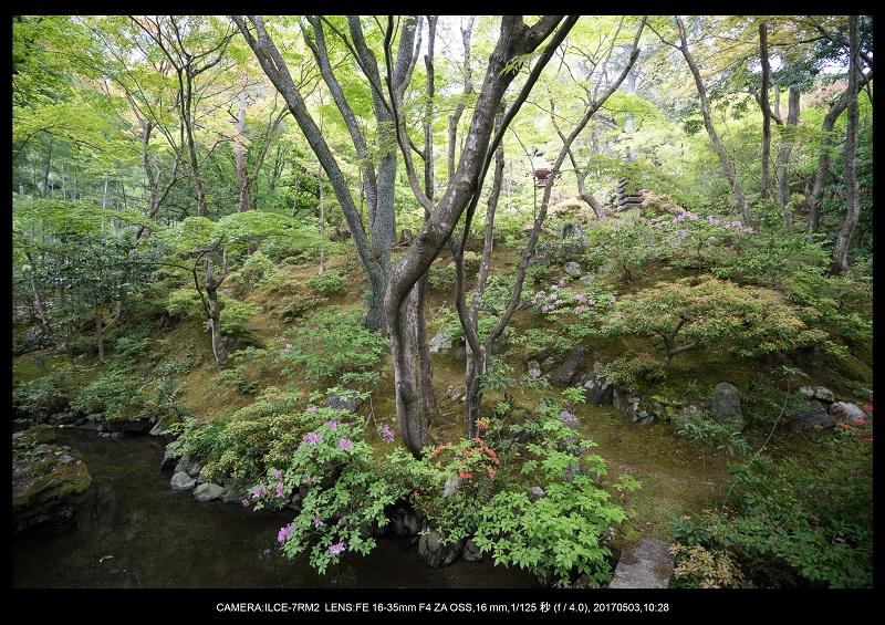 絶景京都・春の新緑青もみじの常寂光寺5月2.jpg