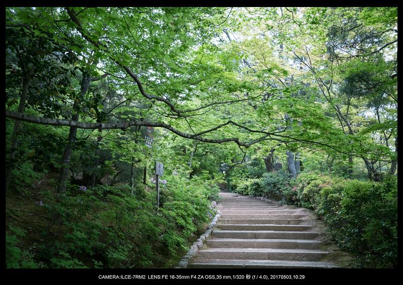 絶景京都・春の新緑青もみじの常寂光寺5月3.jpg