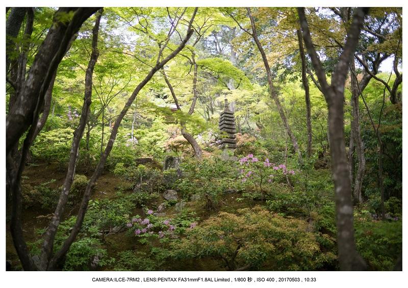 絶景京都・春の新緑青もみじの常寂光寺5月4.jpg