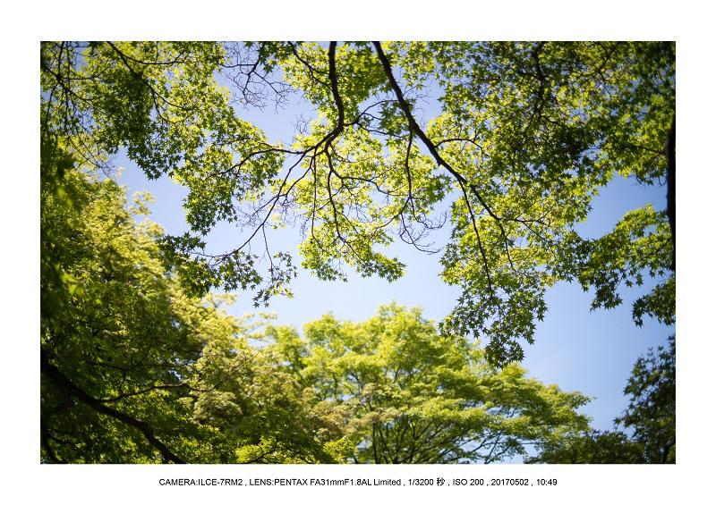 絶景京都・春の新緑青もみじの真如堂5月10.jpg