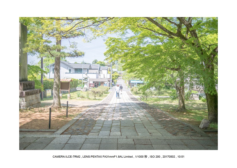 絶景京都・春の新緑青もみじの真如堂5月12.jpg