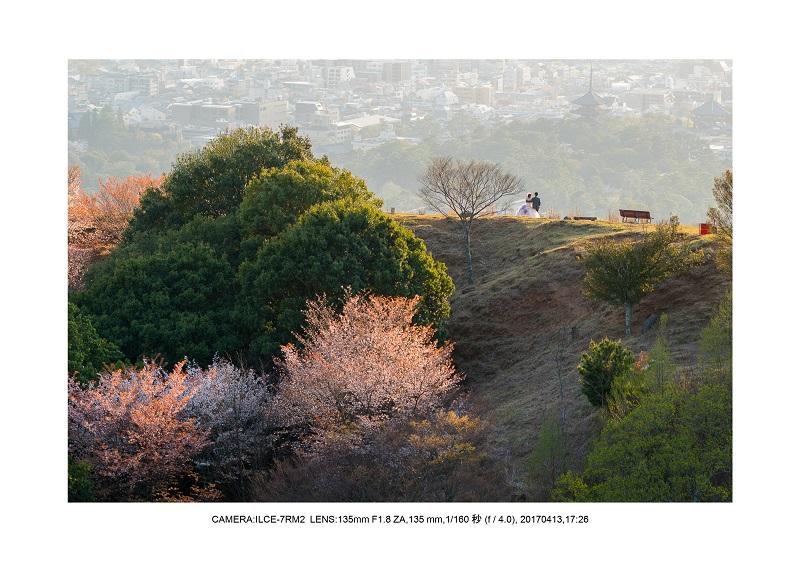 絶景奈良・奈良公園若草山鹿のシルエット桜6.jpg