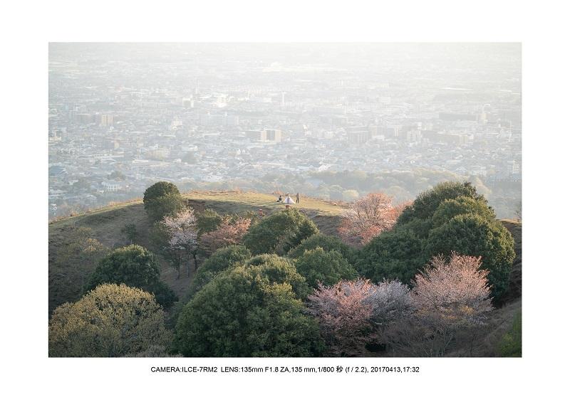 絶景奈良・奈良公園若草山鹿のシルエット桜8.jpg