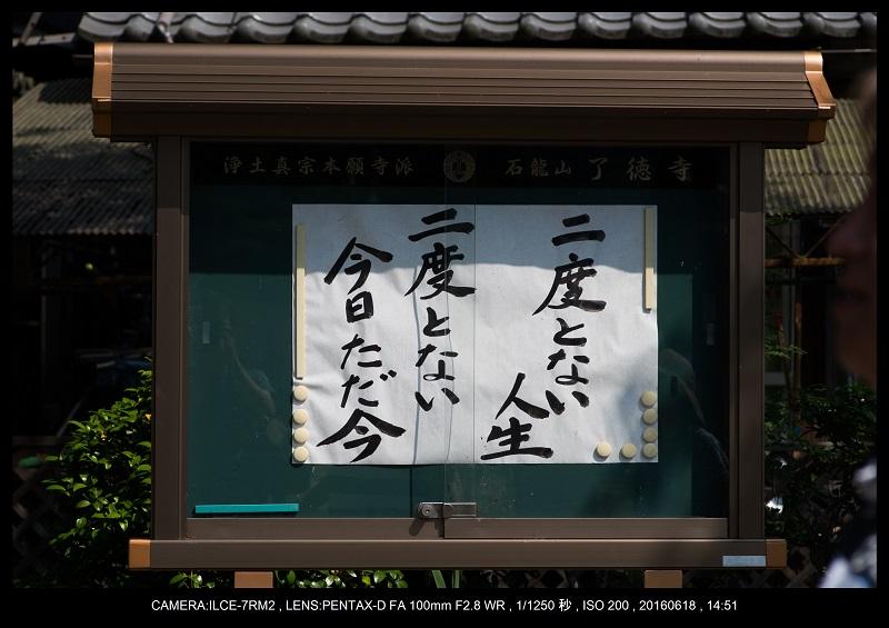醒ヶ井(さめがい)の梅花藻(ばいかも)_28.jpg