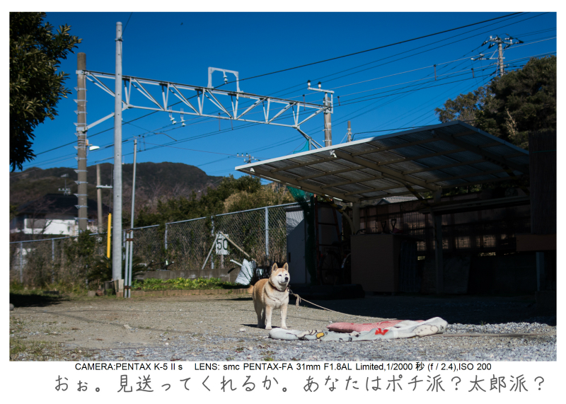 鋸南町の水仙10.jpg