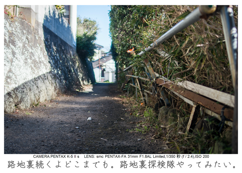 鋸南町の水仙13.jpg