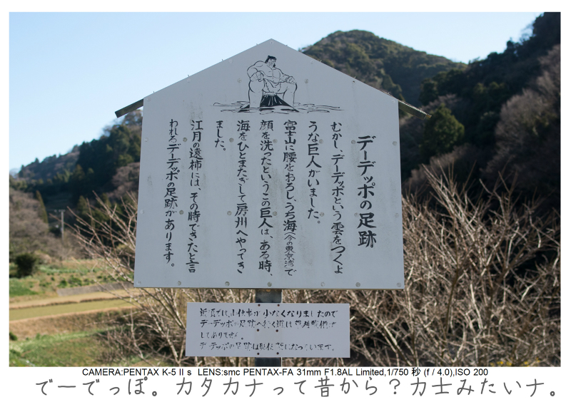 鋸南町の水仙31.jpg