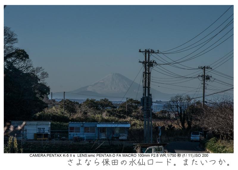 鋸南町の水仙50.jpg