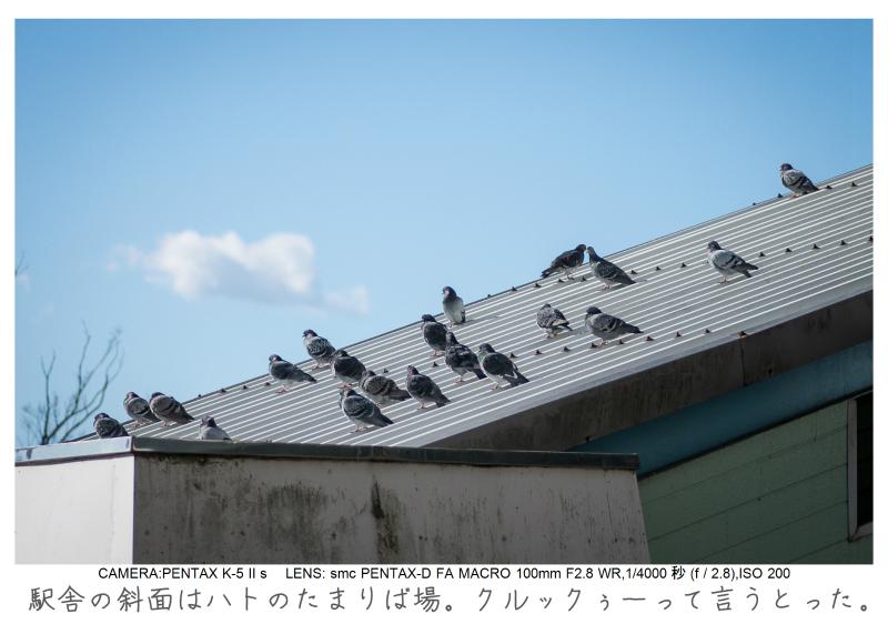 鋸南町の水仙6.jpg