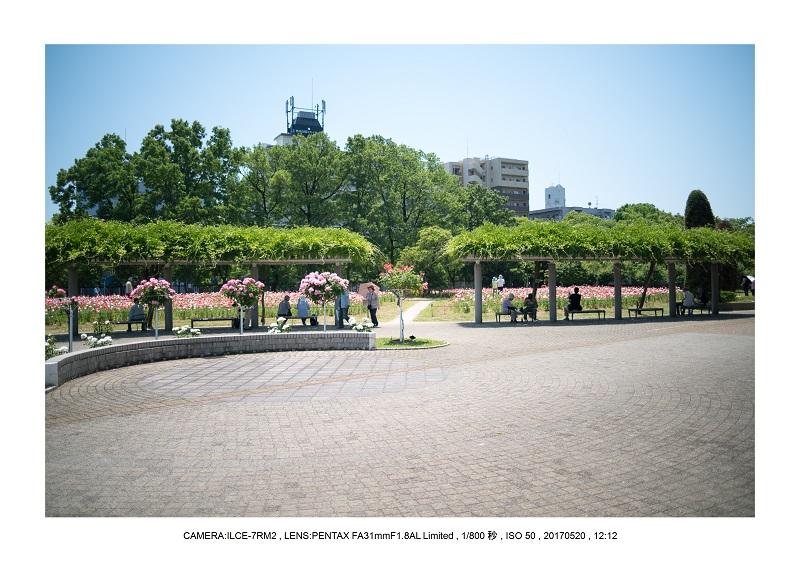 長居植物園170520_11.jpg
