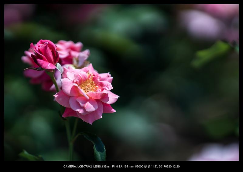 長居植物園170520_13-1.png