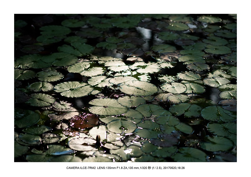 長居植物園170520_27.jpg