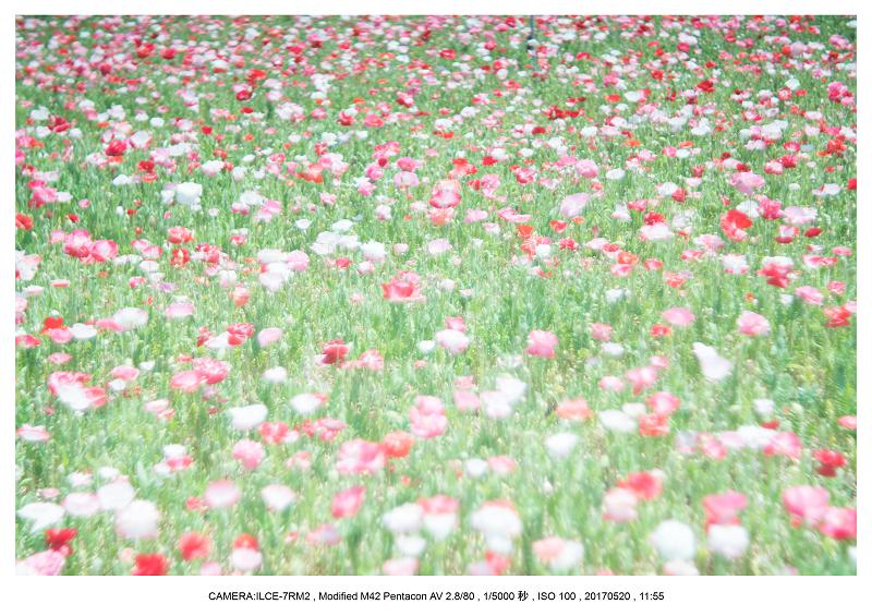長居植物園170520_6-1.png