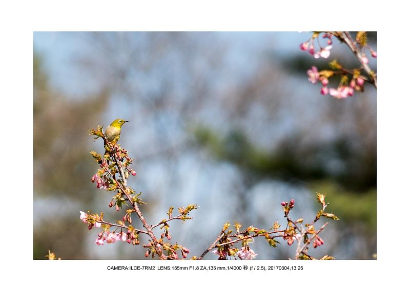 長居植物園20170304_15.jpg