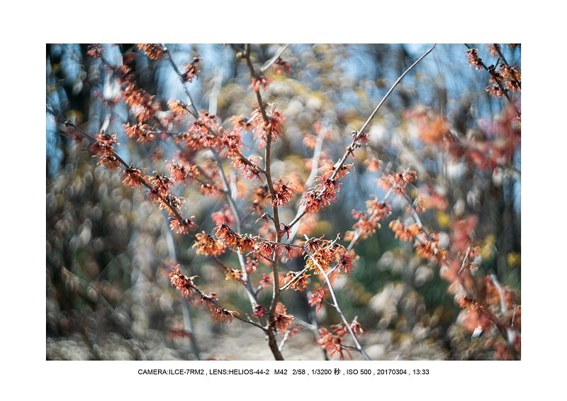 長居植物園20170304_16.jpg