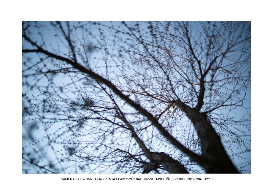 長居植物園20170304_2.jpg