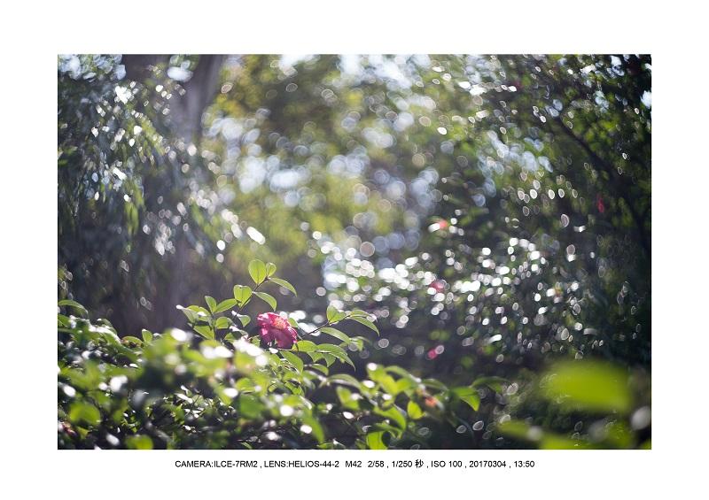 長居植物園20170304_23.jpg