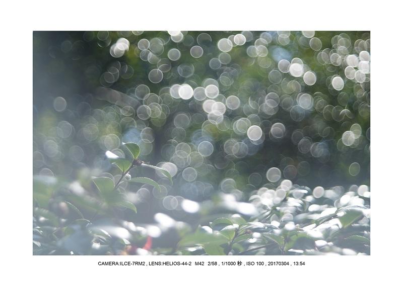 長居植物園20170304_24.jpg