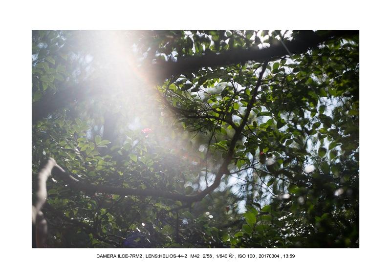 長居植物園20170304_25.jpg