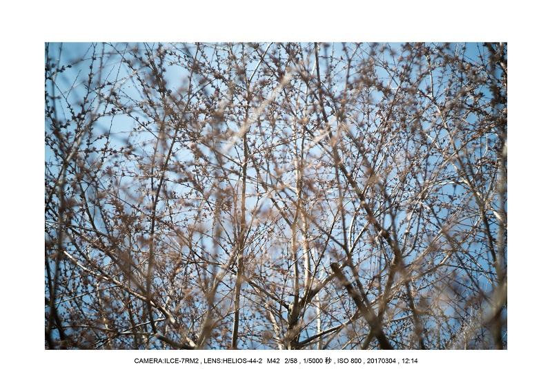 長居植物園20170304_4.jpg