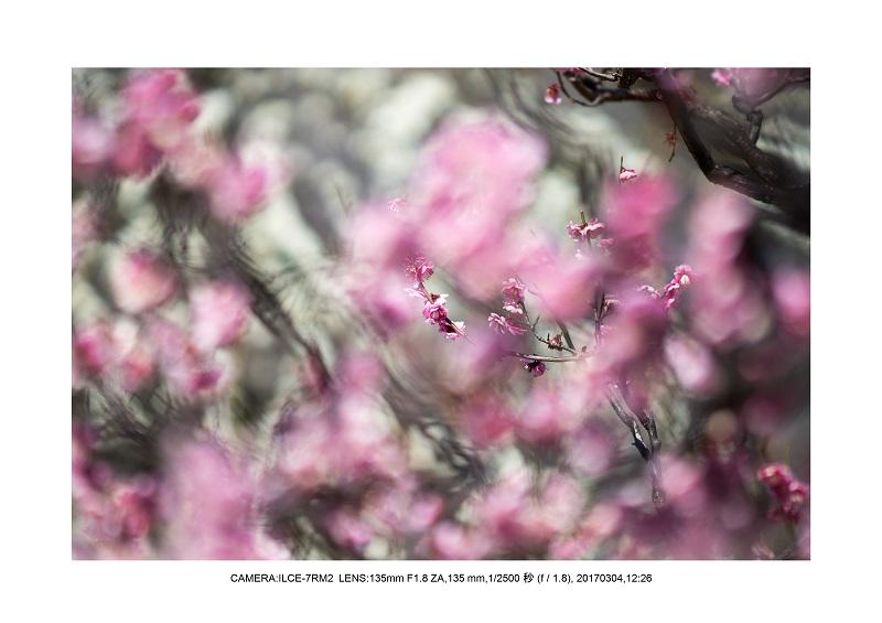 長居植物園20170304_8.jpg