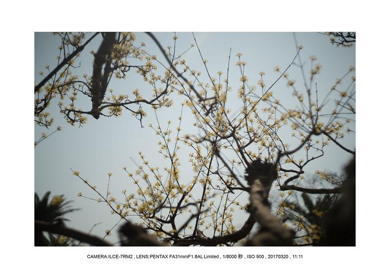 長居植物園でマルシェ17.jpg