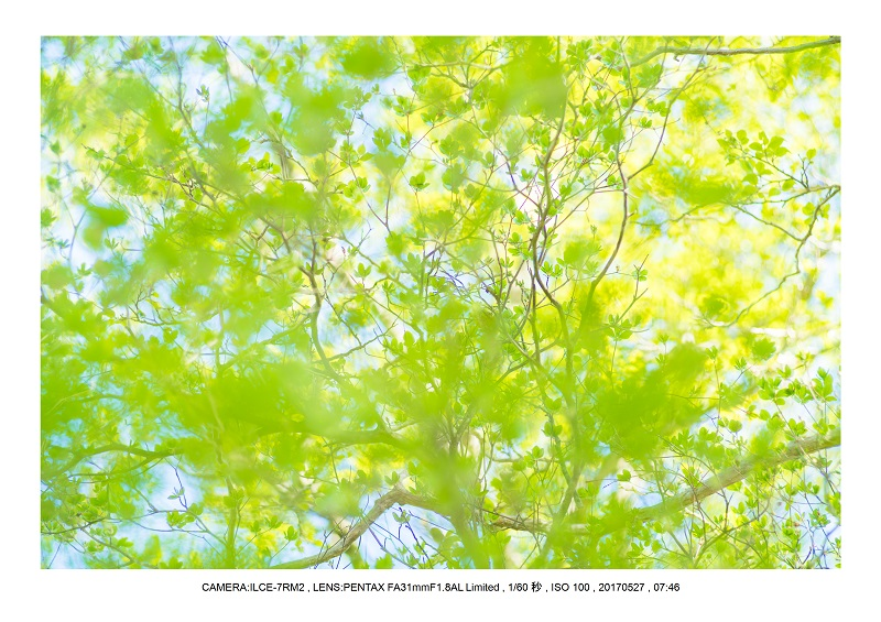 関西の星景スポット大台ケ原で星の風景撮影で天の川47.jpg
