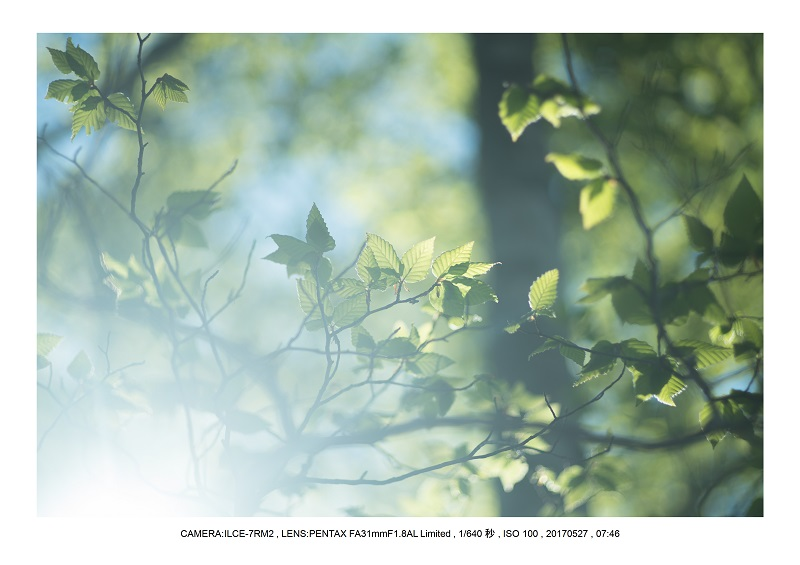 関西の星景スポット大台ケ原で星の風景撮影で天の川48.jpg