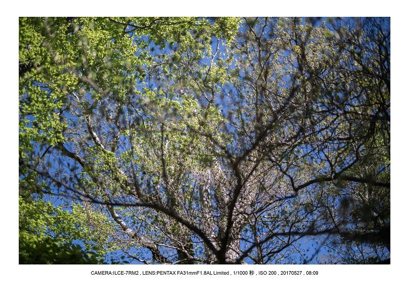 関西の星景スポット大台ケ原で星の風景撮影で天の川49.jpg