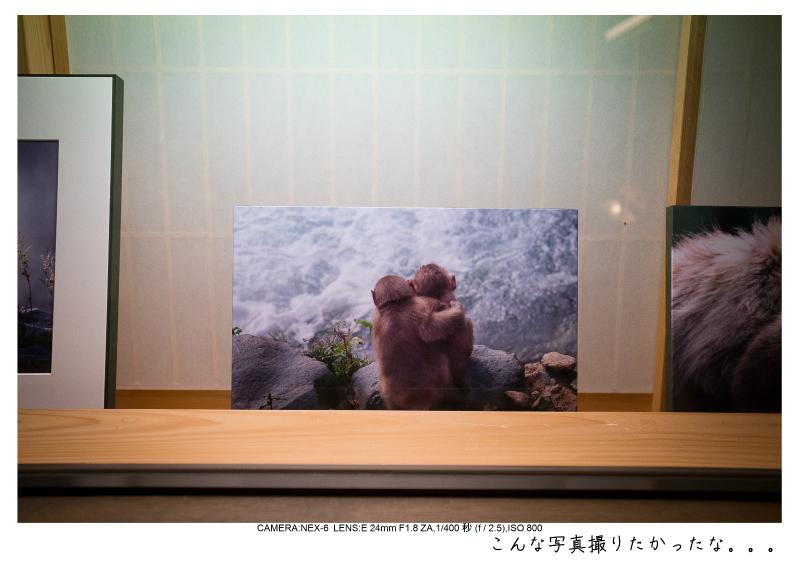 snowmonkey jigokudani111.jpg
