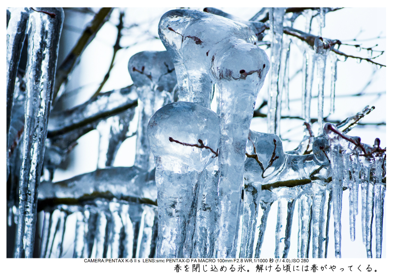 snowmonkey jigokudani122.jpg