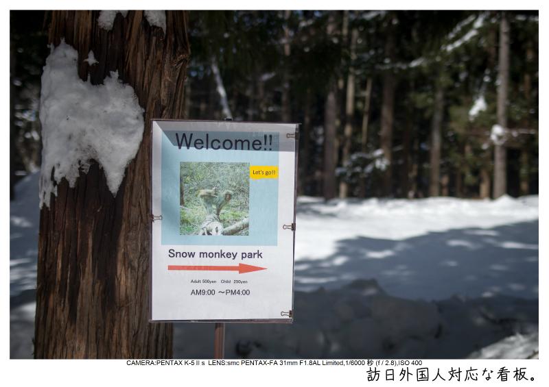 snowmonkey jigokudani13.jpg